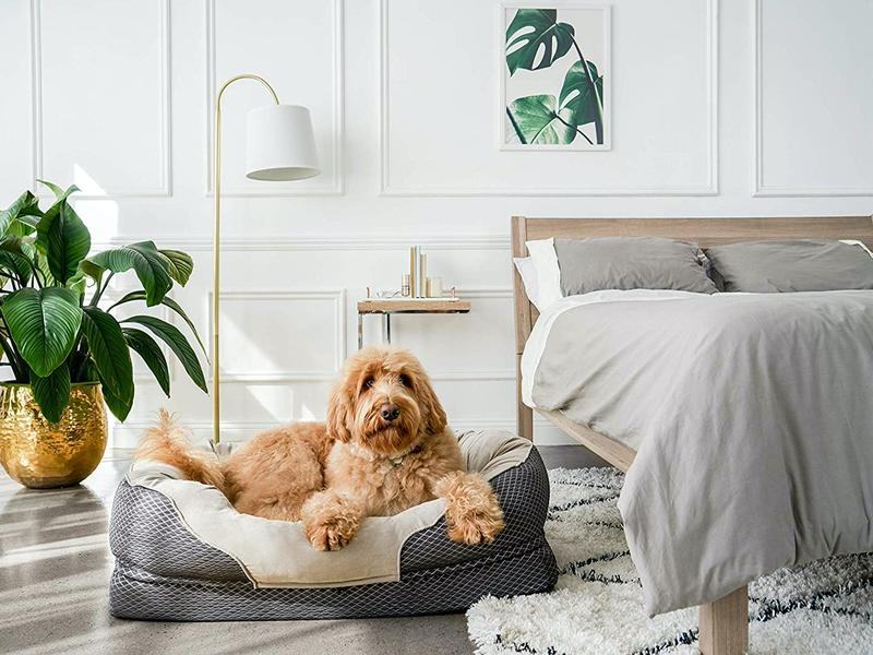 Right Bed for Dog